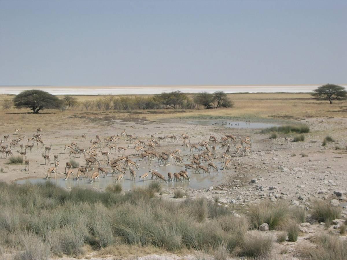 Etosha National Park waterhole