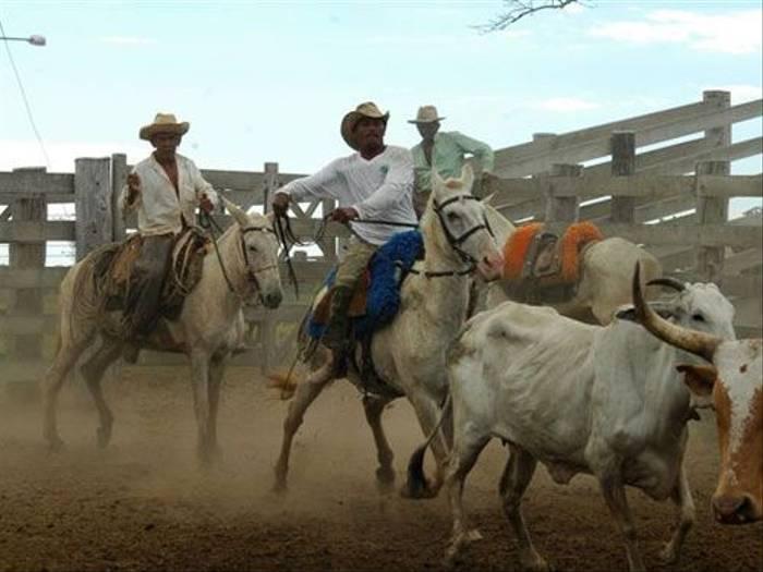 Cowboys (Gerald Broddelez)