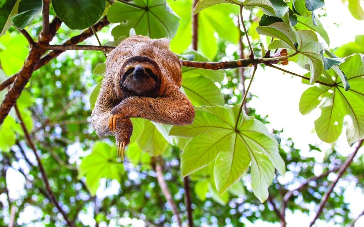 Costa Rica - Sloth - AdobeStock_75903288.jpg