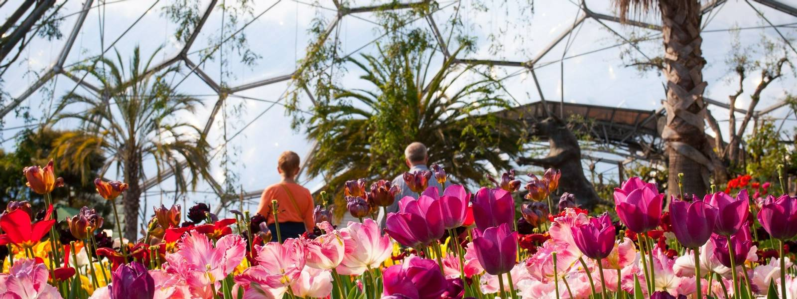 GardenTours-StIves-EdenProject-AdobeStock_145112347.jpeg