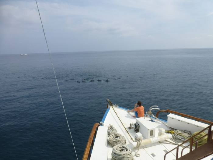 Dolphin watching from the boat (Kerrie Porteous)