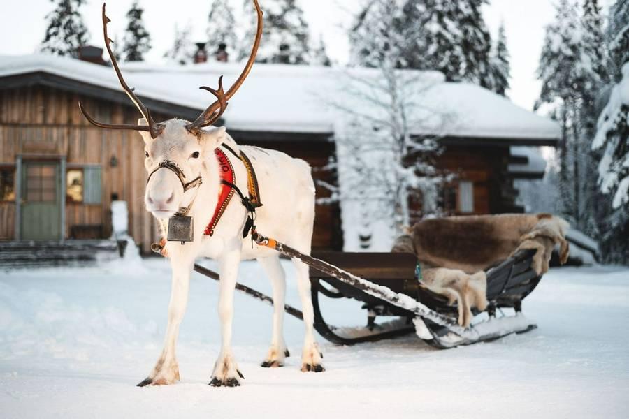 Short Break At Rovaniemi Arctic Circle Wilderness Lodge