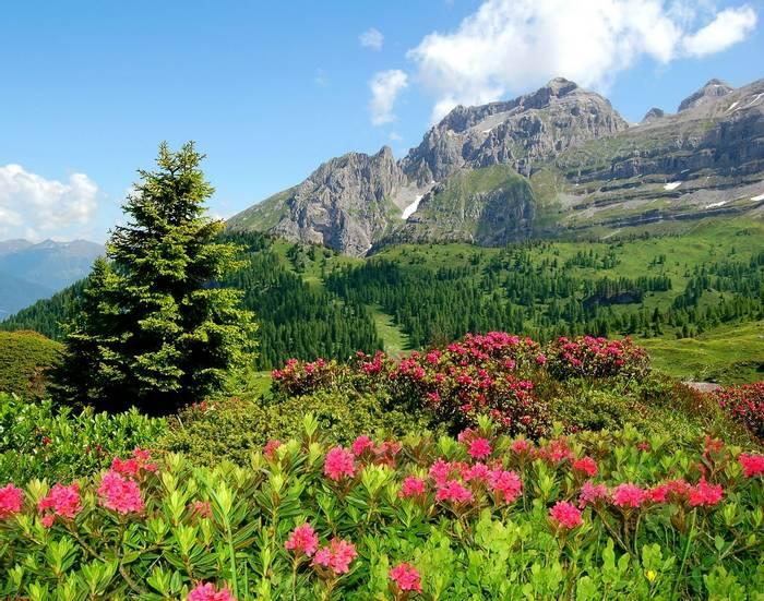 Dolomites Italy shutterstock_55492033.jpg