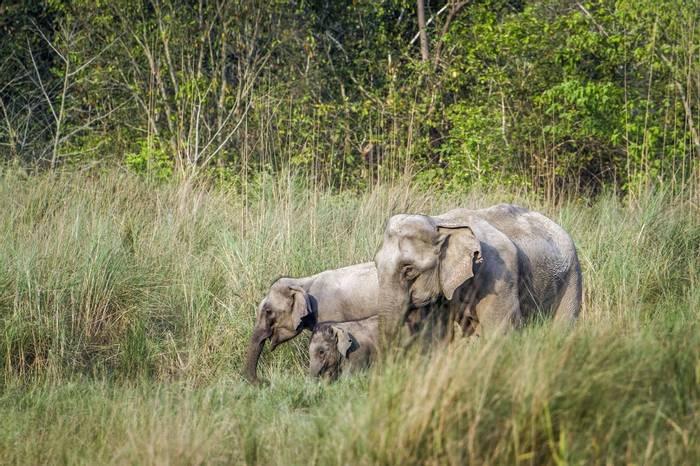 Elephant Bardia National Park Nepal Shutterstock 446298952