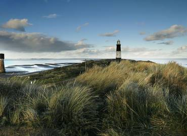 Spring and Autumn Migration at Spurn (Day Trip)
