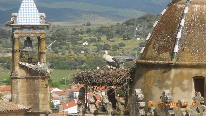 Storks in Trujillo