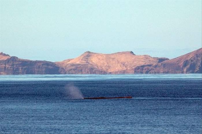 Sperm Whale (Luis Diaz)