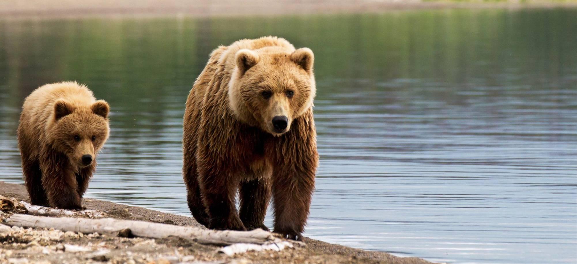Juneau-Brown Bears in Juneau - Itinerary Desktop.jpg