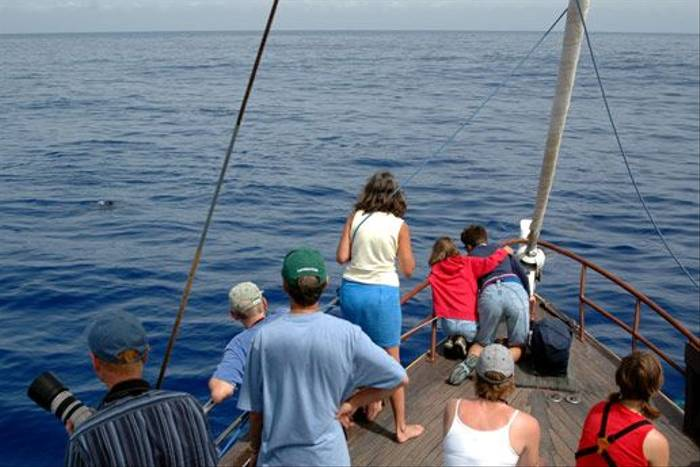 Watching Dolphins onboard Ventura (Luis Diaz)
