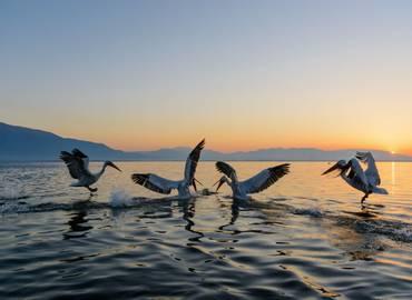 Greece - Lake Kerkini in Autumn