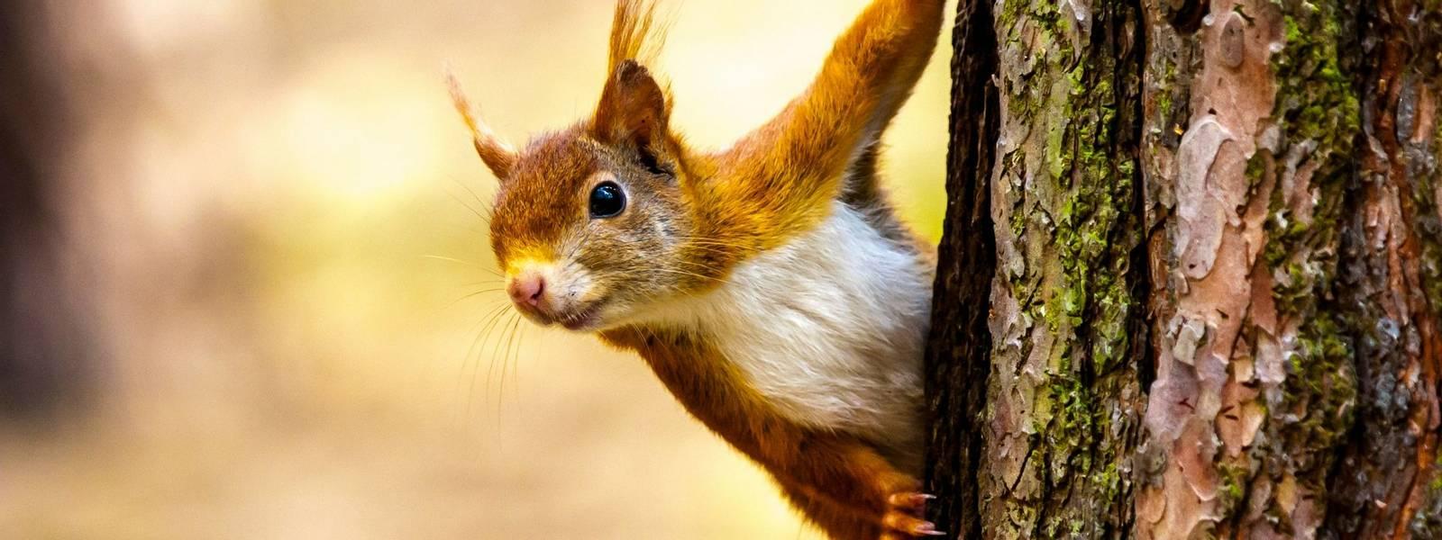 Derwent Bank -Wildlife -  AdobeStock_134985579.jpeg