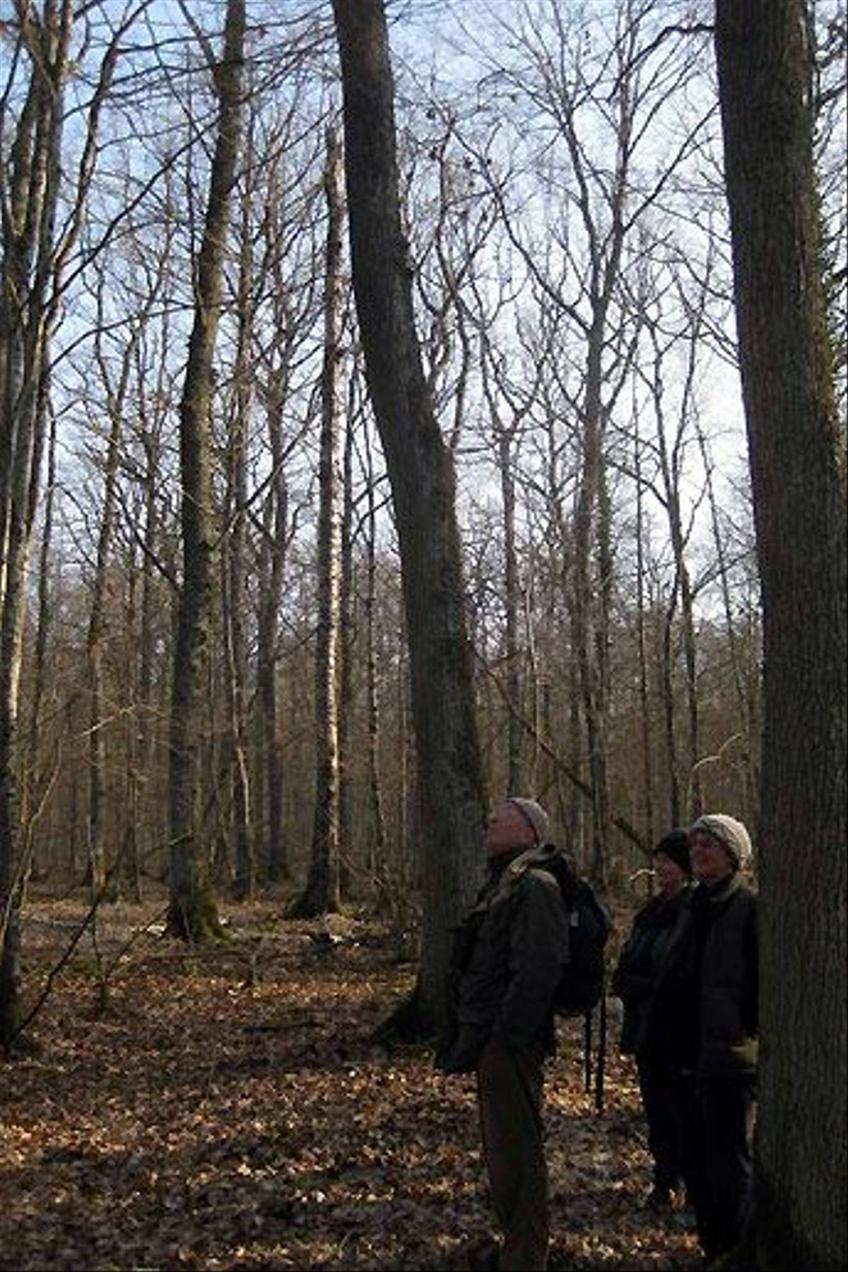 Woodpecker habitat (Bob Dawson)