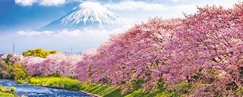Luxury Cherry Blossom & Mount Fuji Explorer