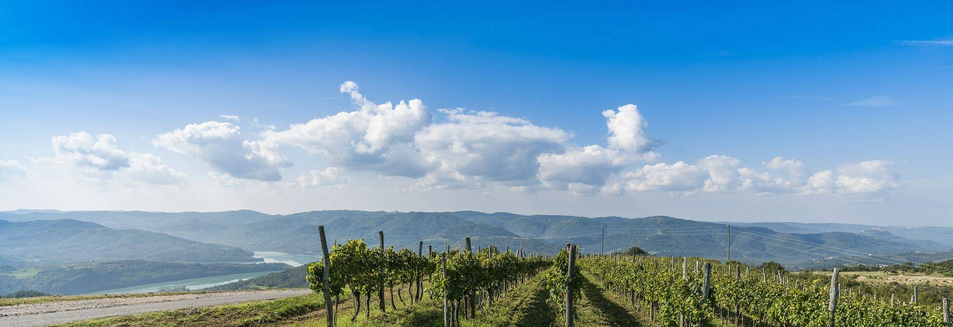 Vineyard Istria 01