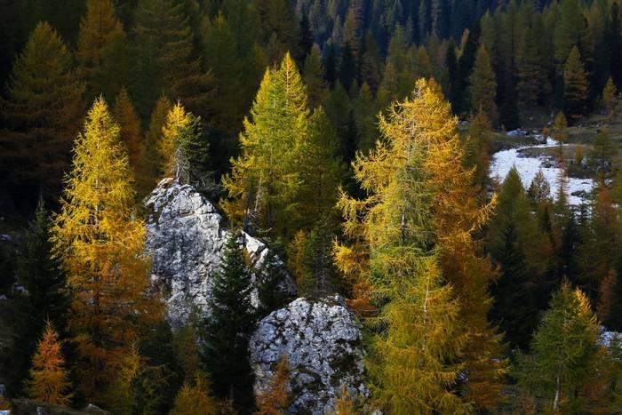 Autumn Colours (Luca Boscain).jpg