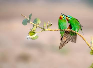 Uzbekistan's Wildlife & Culture