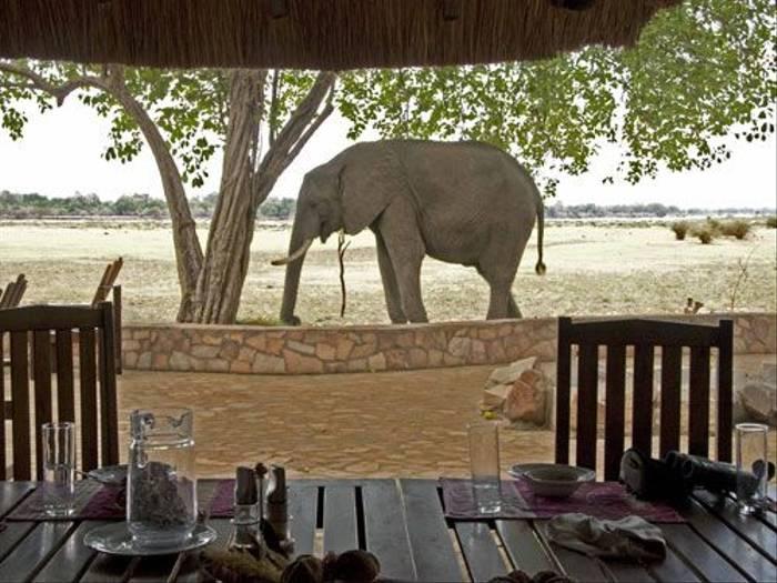 Elephant (Ron Foulkes)