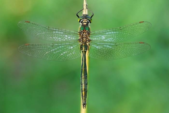 Brilliant-Emerald,-UK-shutterstock_299399828.jpg