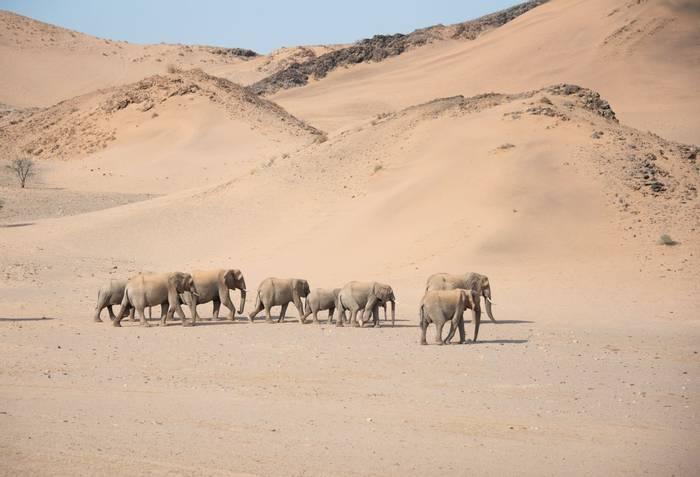 Elephants, Damaraland, Namibia shutterstock_1690710268.jpg