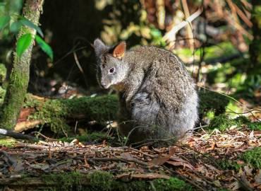 Australia's Mammals