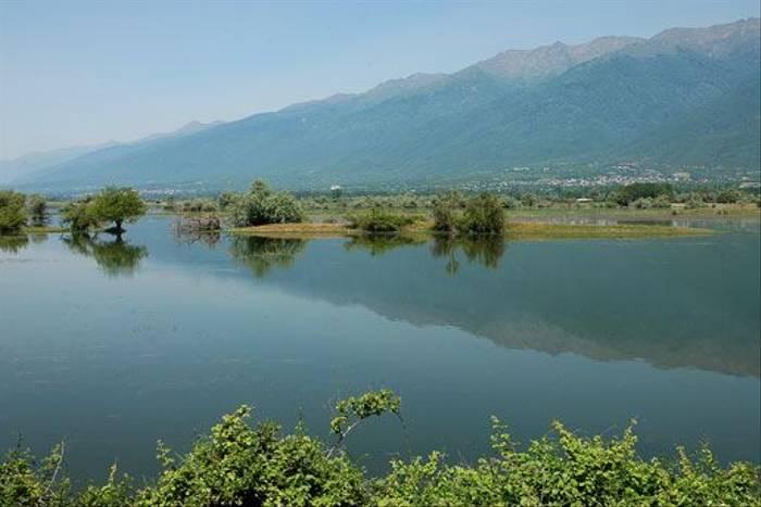 Lake Kerkini (David Morris)