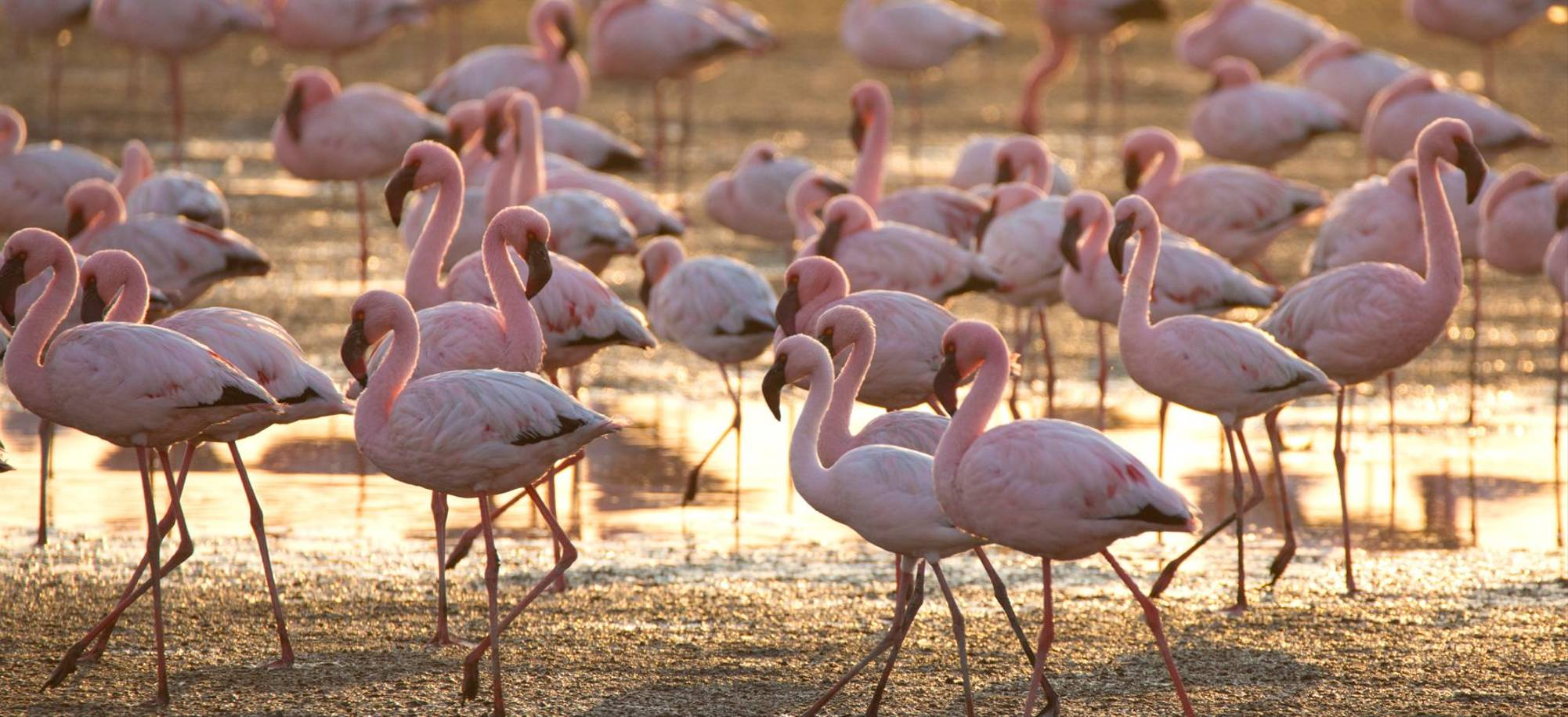 Walvis Bay   Flamingos   Itinerary Desktop