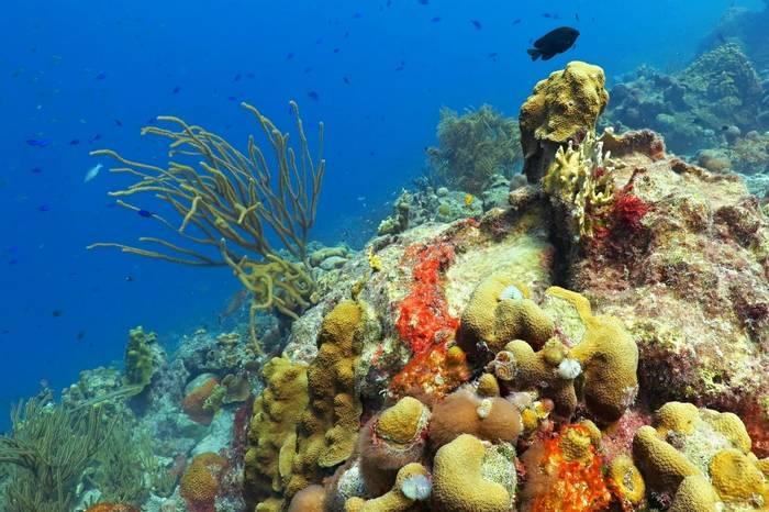 Coral Reef, Puerto Rico.jpg
