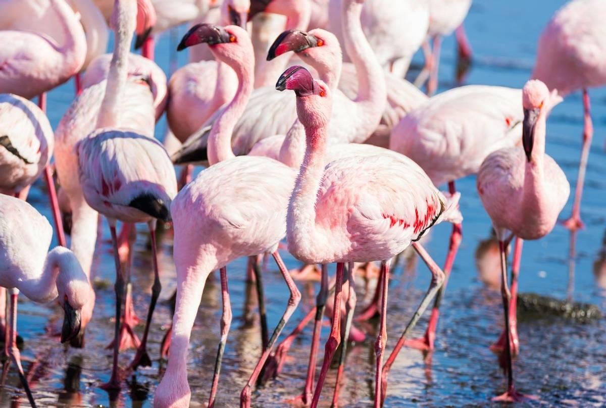Flamingos, Namibia shutterstock_607134134.jpg