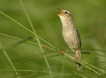 Spring Birding in Lithuania