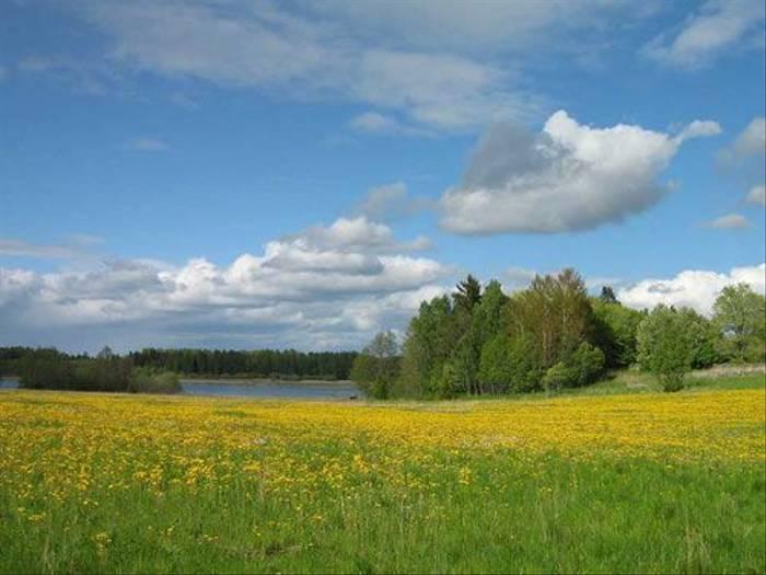 Dandelion field (Daniel Green)