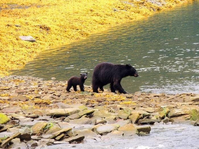 Black Bear, Canada Shutterstock 211678615