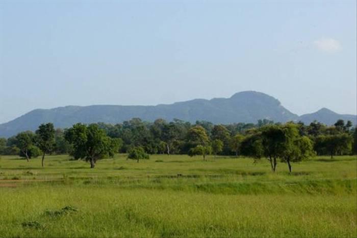 Madhai Meadow, Satpura