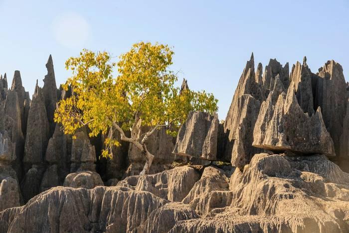 Tsingy, Madagascar shutterstock_1010296390.jpg