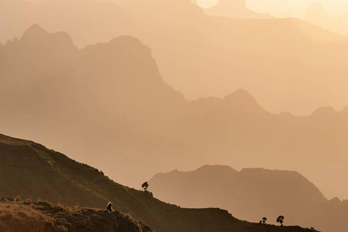 Gelada Baboon in Simien Mountains, Ethiopia shutterstock_658485187.jpg