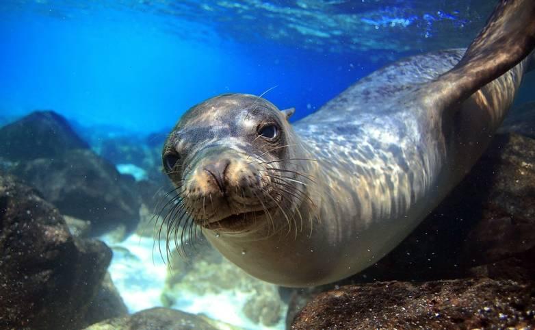 Ecuador&Galapagos-Seal-AdobeStock_54637272.jpeg