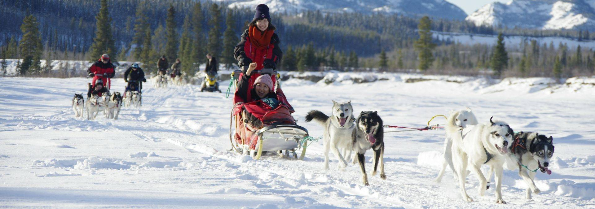 Dog Sledding 3 Credit Arctic Range Adventure Ltd