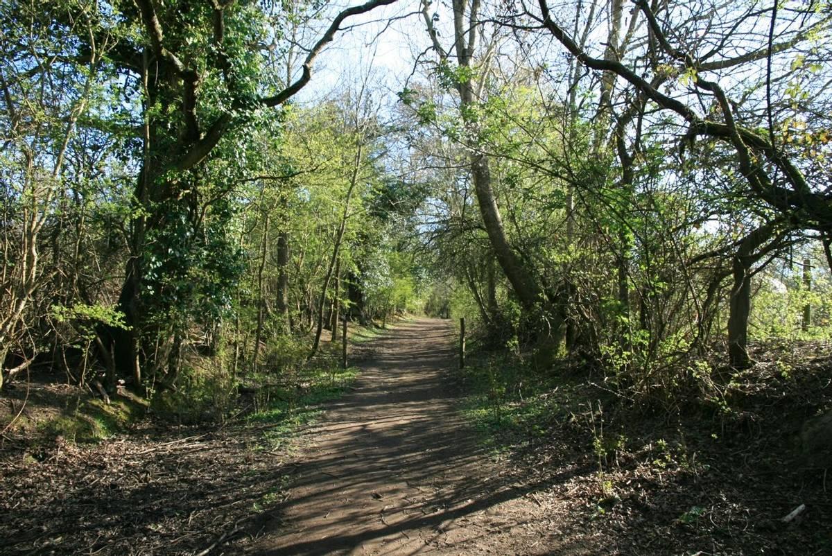 Woodland_Path_Pulborough_Brooks.JPG