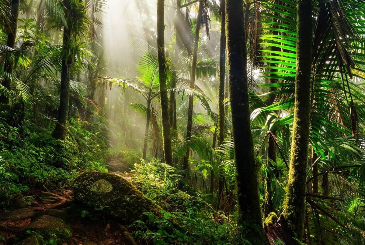El-Yunque-National-Forest,-Puerto-Rico-shutterstock_426563971.jpg