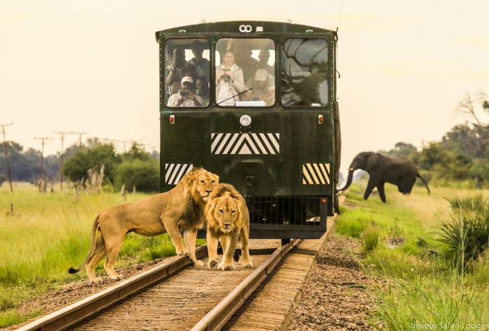 Elephant Express - They all missed the Elephant.jpg
