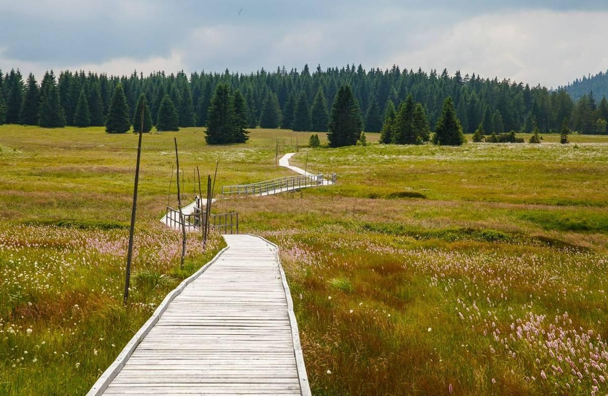 Kemeri National Park Shutterstock 152157284