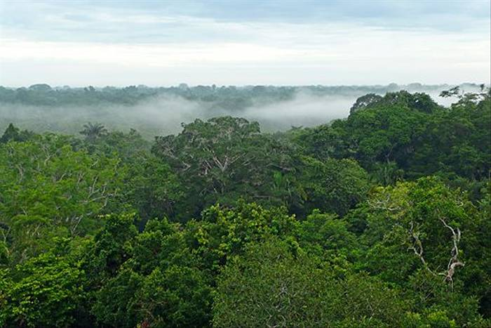 Forest canopy (Robert Davidson)