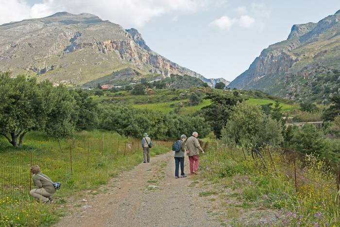 Group searching for wildflowers near Plakias (Mike Vickers)