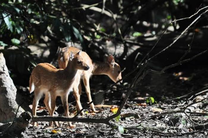 Spotted Deer, Chitwan (John Keighley)