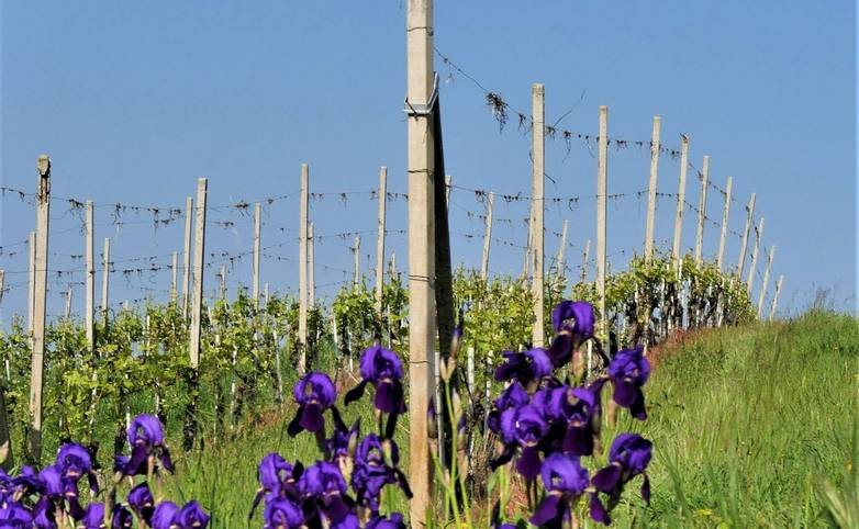 Italy - Montelupo - AdobeStock_265318215.jpeg