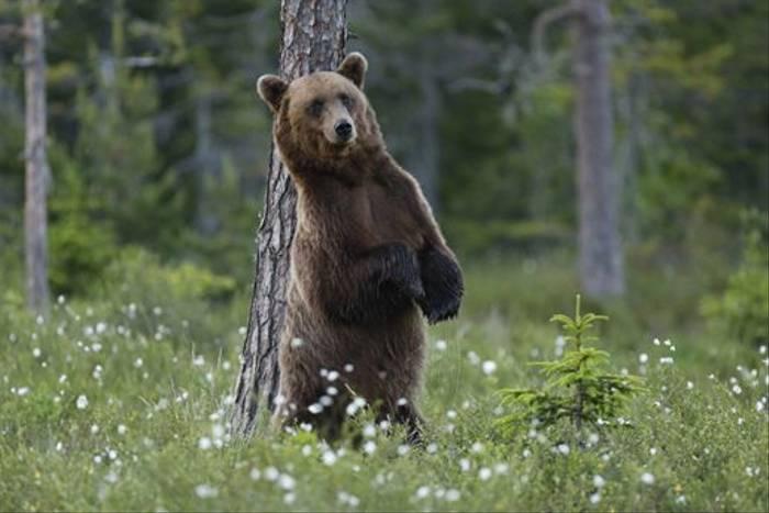 Standing Bear, Sweden (Hakan Vargas)
