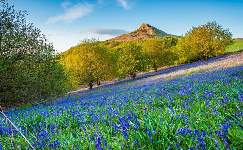Bluebell Slope and Roseberry Topping