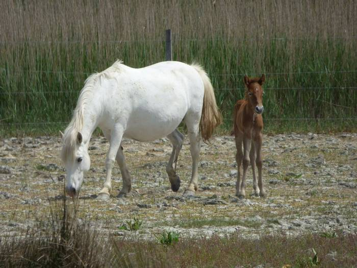 Horse and Foal (Debbie Hart)