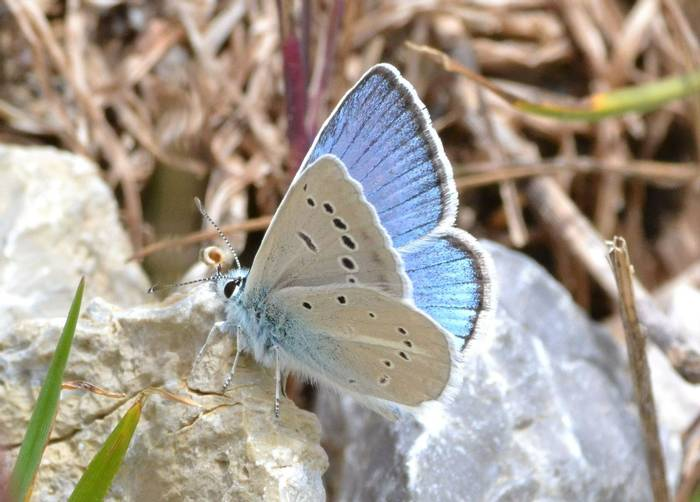 Chelmos Blue.1801 Mount Chelmos