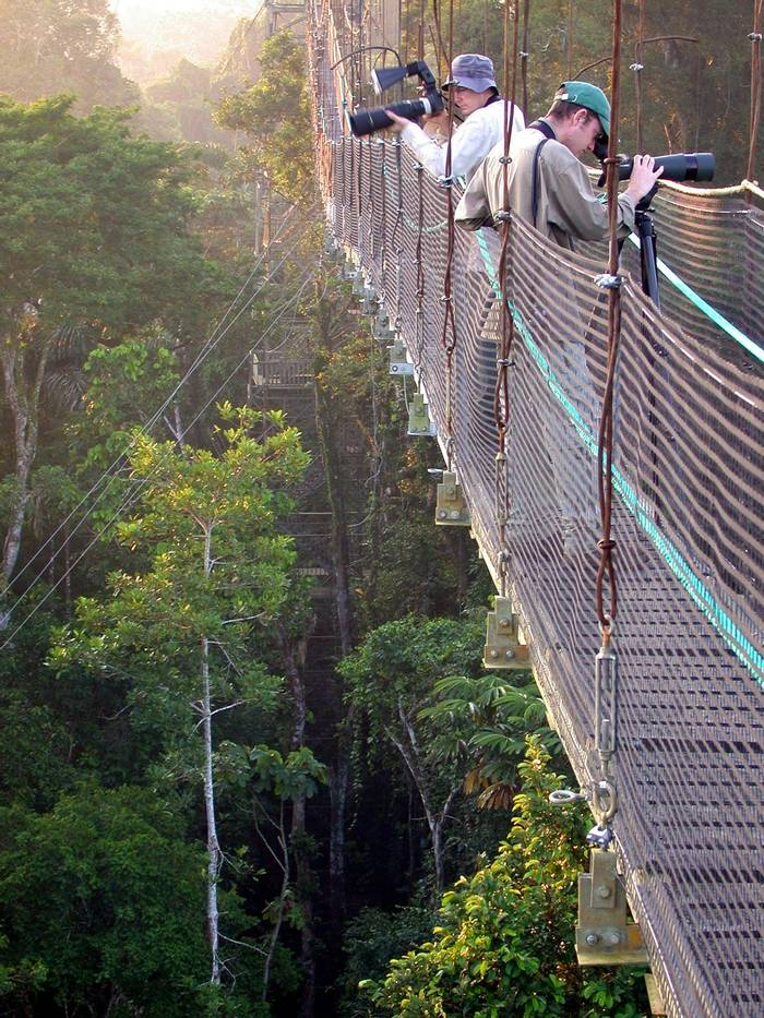 Canopy Walkway at Sacha
