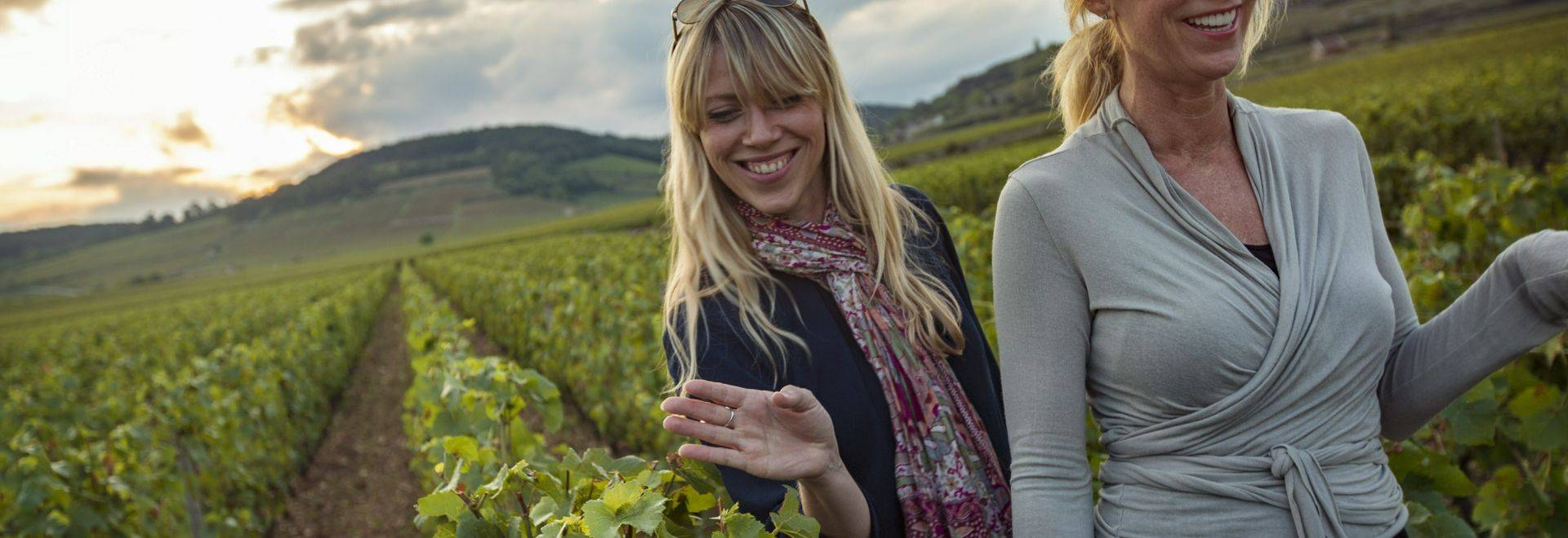 Italy Vineyard Sunset Travellers - IMG1050 Lg RGB.jpg